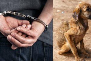 Жестокое обращение с животными куда обратиться чехов