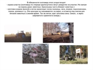 Должностная инструкция егеря охотхозяйства